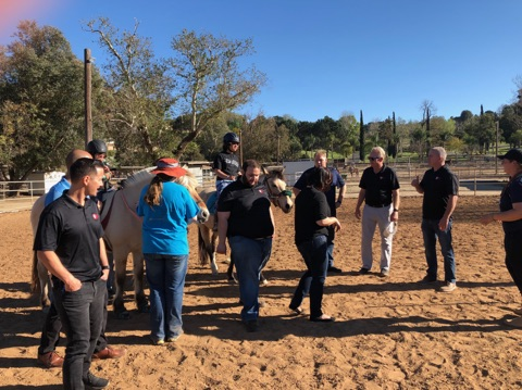 Community, Pacwestpc, Pacific Western Painting and Construction, Team, Expert, Horses