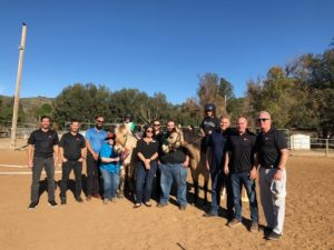 PacWest Painting, POVA Therapeutic Center, Giving Back, Horses, Pacwestpc