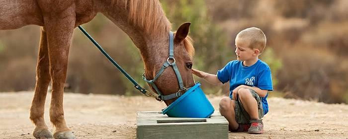 Young Boy feeding Horse